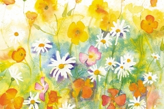 Californian Poppies and Daisies by Penny Silverthorne