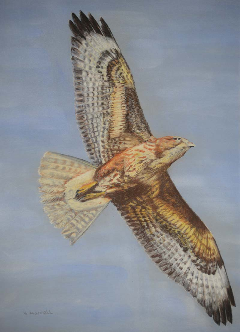 """Freedom"" by artist Hazel Morrell"